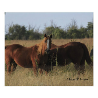 Horses in a Pasture Photographic Print