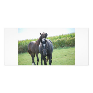 Horses in Love Full Color Rack Card