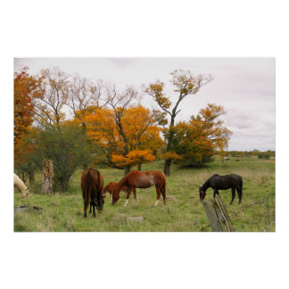 Horses In The Fall Poster