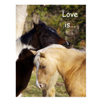 Horses Love Is Postcards