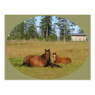 Horses: Mama and Baby Horse Lying Down Postcard