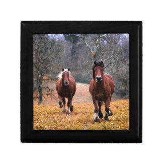 Horses Nature Gift Box