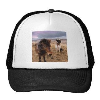 Horses of Iceland Cap