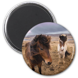 Horses of Iceland Magnet