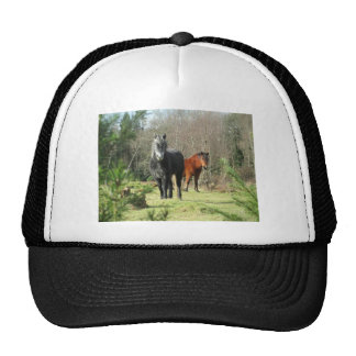 Horses of The Forest 1 Cap