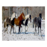 Horses on a Farm Posters