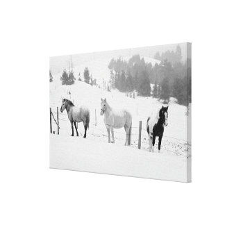 Horses on ranch canvas print
