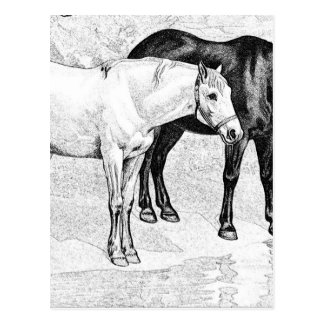 horses,pencil drawn postcards