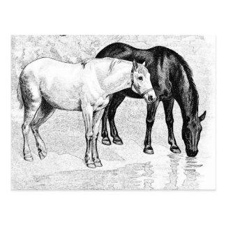horses,pencil drawn postcard