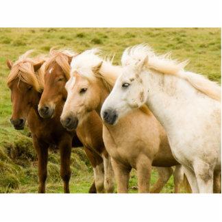 HORSES CUT OUTS