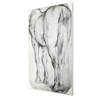 Horse's Rear Canvas Print