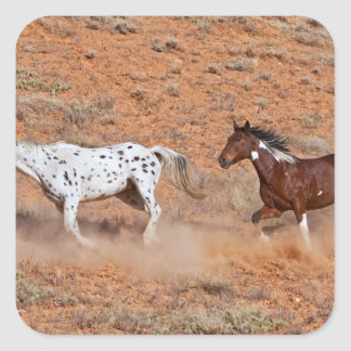 Horses roaming the Big Horn MT of Shell Wyoming. 2 Square Sticker
