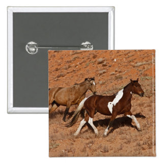 Horses roaming the Big Horn MT of Shell Wyoming Pins