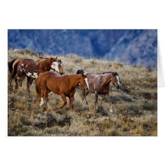 Horses roaming the scenic hills of the Big Horn 2 Greeting Cards