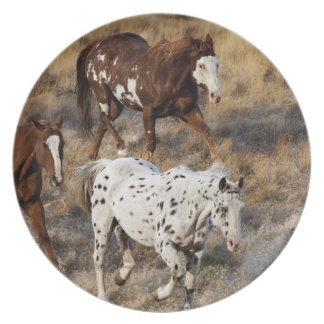 Horses roaming the scenic hills of the Big Horn Plate