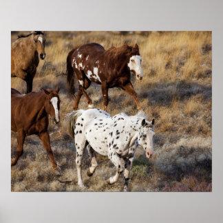 Horses roaming the scenic hills of the Big Horn Print
