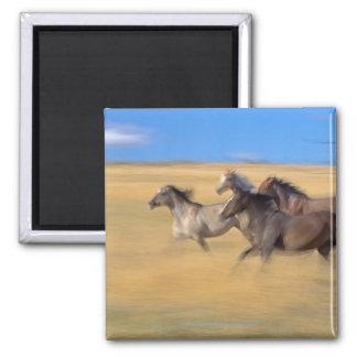 Horses   Seneca, Oregon, USA Magnet