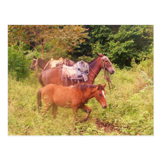 horses south america postcard