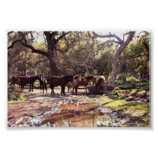 Horses The Watering Hole Three Rivers California Poster