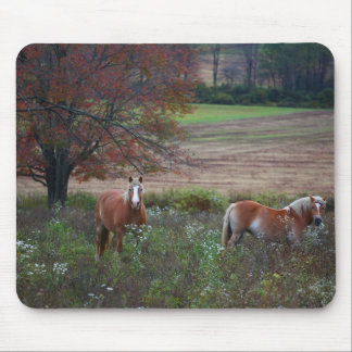 Horses - West Virginia Mouse Pad