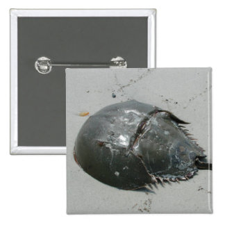 Horseshoe Crab 15 Cm Square Badge