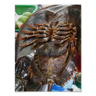 Horseshoe Crab ... Thai Asian Street Food Poster