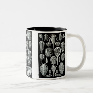 Horseshoe Crabs, Trilobites & Snails Two-Tone Coffee Mug