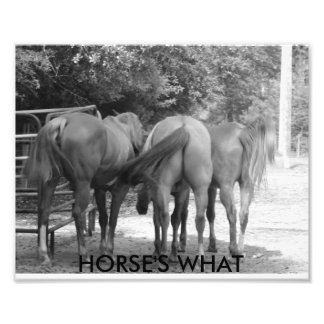 Horses's What Photograph