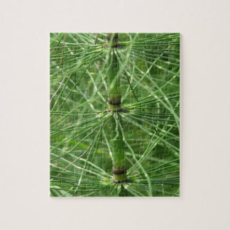 Horsetail Fern Puzzle