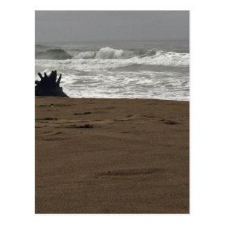 Horsfall Beach and Driftwood stump Postcard