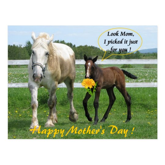 Horsy Mother's Day Postcard