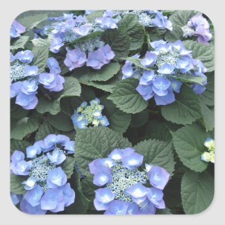 Hortensia Square Sticker