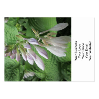 Hosta Closed Rain Garden Business Card Templates