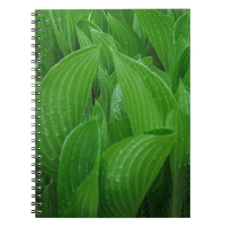 Hosta Leaves with Raindrops Notebook