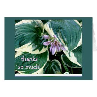 Hosta Thank you card