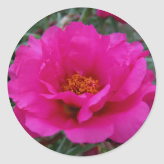 Hot for PInk Flower Sticker