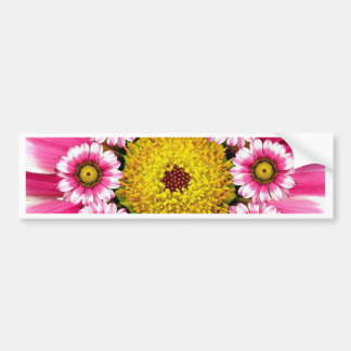 Hot Pink and Yellow Daisy Flowers Bumper Stickers