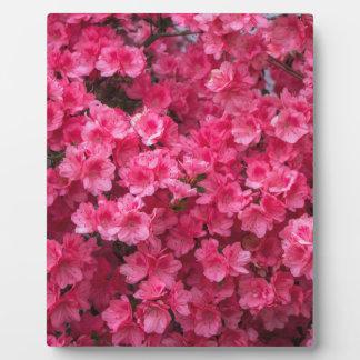 Hot Pink Azalea Blossoms Plaque