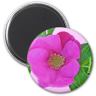 Hot Pink Beach Rose Coordinating Items 6 Cm Round Magnet