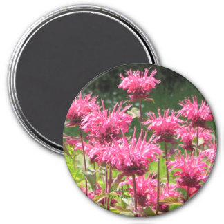 Hot Pink Bee Balm Magnet