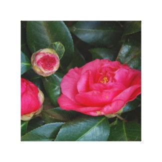 Hot Pink Camellia Canvas Print