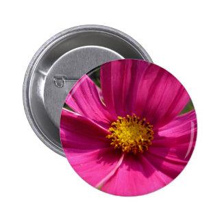 Hot Pink Cosmos Photo Pin
