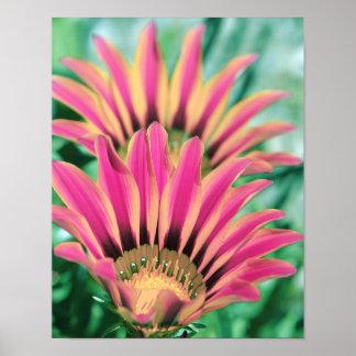 Hot Pink Daisy Petals Poster