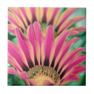 Hot Pink Daisy Petals Tile
