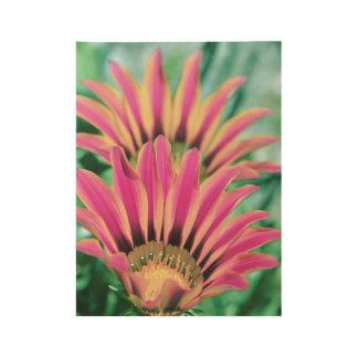 Hot Pink Daisy Petals Wood Poster