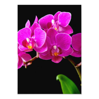 Hot Pink Dendrobium Orchid Flower Orchids Template