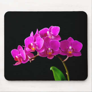 Hot Pink Dendrobium Orchid Flower Orchids Template Mouse Pad