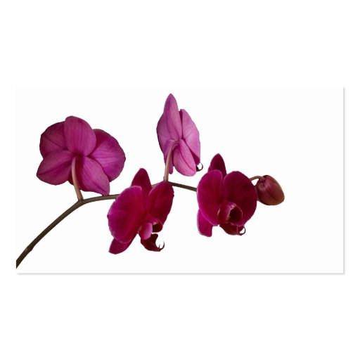 Hot Pink Dendrobium Orchid - Orchids Background Business Cards