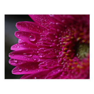 Hot Pink Flower and Droplets Postcard