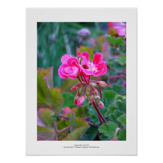 Hot pink flowers beautiful colorful garden photo posters